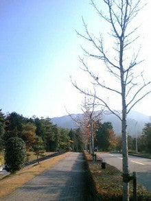 桂米紫のブログ-冬の樹.jpg