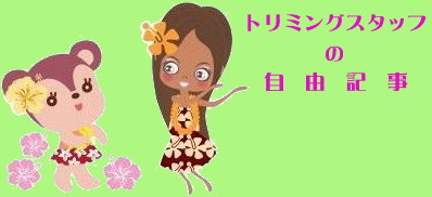 埼玉県入間市 トリミングサロン Merry&Rutile