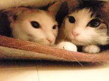 PFL★MIKIのブログ-2013011222380000.jpg