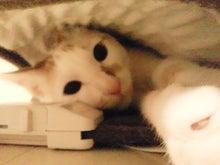 PFL★MIKIのブログ-2013012300160000.jpg
