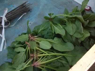 農業トータルコーディネーター イノウエ農商事のブログ-01214