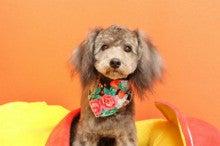 Trimming Salon  Dog Choice