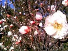 桂米紫のブログ-090206_155548.JPG