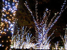 桂米紫のブログ-081201_204525.JPG