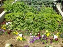 ログハウス・ビルドのブログ-菜園2