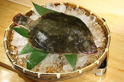北海道より直送の寿司。堺筋本町駅徒歩1分 おたる栄六すし 大阪-マツカワカレイ