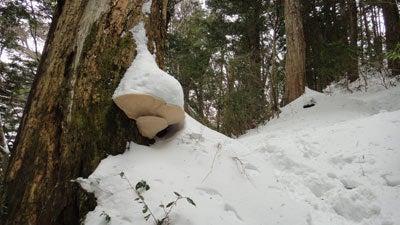 おやまのしゅっぽ 出発進行~♪-巨大キノコにも積雪