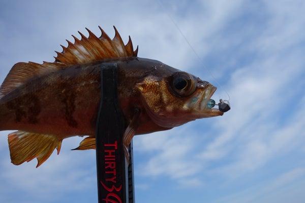 D_Groove Blog/No Fishing No Life.-7
