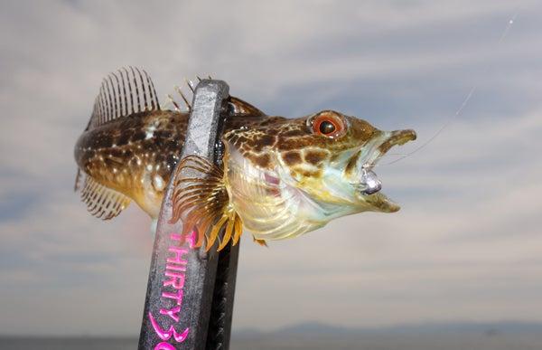 D_Groove Blog/No Fishing No Life.-10