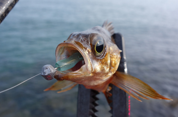 D_Groove Blog/No Fishing No Life.-6