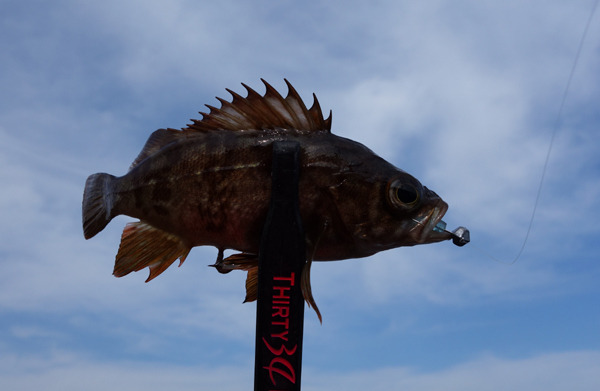 D_Groove Blog/No Fishing No Life.-5