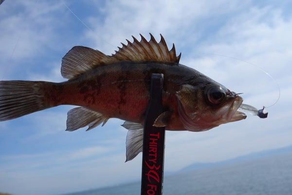 D_Groove Blog/No Fishing No Life.-4