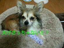 A.コッカー 専務のつぶやき-img20130129_203427.jpg
