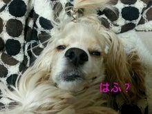 A.コッカー 専務のつぶやき-img20130129_203305.jpg
