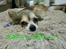 A.コッカー 専務のつぶやき-img20130129_203442.jpg