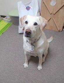 $ひろみちゃんと10pooのおきらくブログ-盲導犬 オスカー
