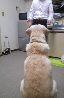 $ひろみちゃんと10pooのおきらくブログ-盲導犬 オスカーと飼主