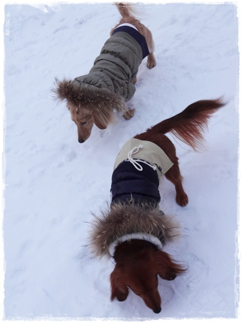 犬旅コンサルタントMiwaのブログ-FOLON