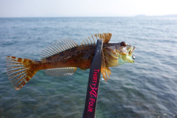 D_Groove Blog/No Fishing No Life.-11