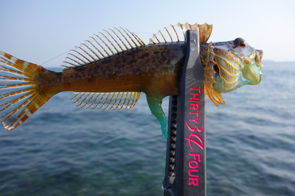 D_Groove Blog/No Fishing No Life.-13
