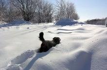 $ムツゴロウ動物王国のブログ-雪へダイブ