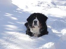$ムツゴロウ動物王国のブログ-雪の中