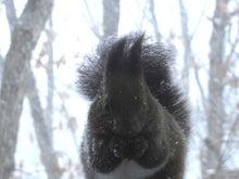 $ムツゴロウ動物王国のブログ-吹雪の中2