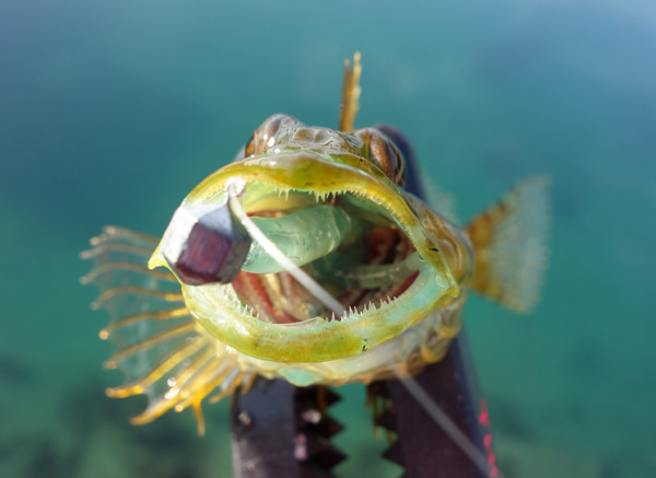 D_Groove Blog/No Fishing No Life.-11