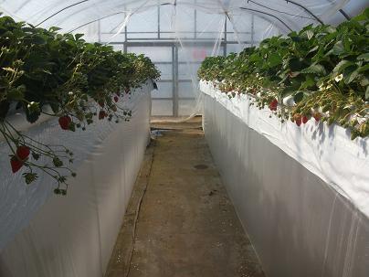 農業トータルコーディネーター イノウエ農商事のブログ-01312