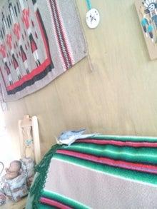 オカメインコのももちゃんと花教室と旅日記-130130_092932.jpg