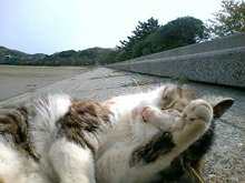 桂米紫のブログ-上総の猫.jpg