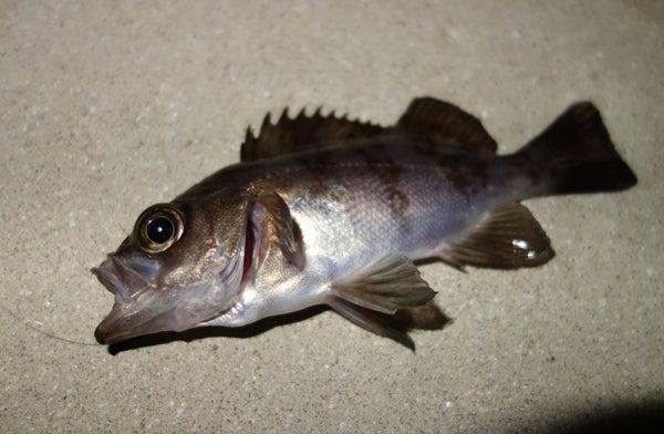 D_Groove Blog/No Fishing No Life.-2