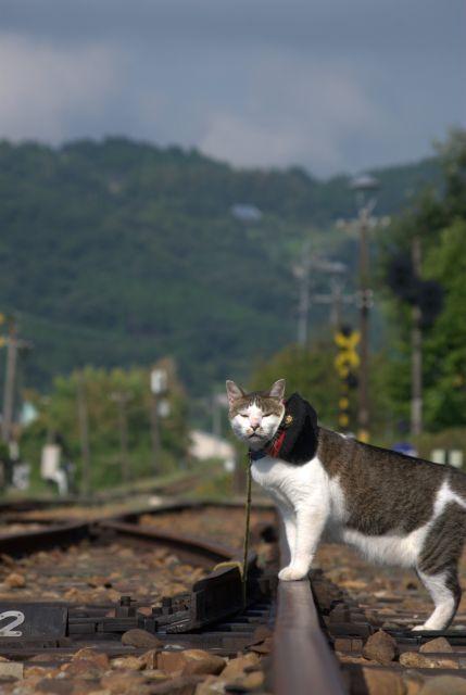 駅長猫コトラの独り言~旧 片上鉄道 吉ヶ原駅勤務~-よろしくのコトラ