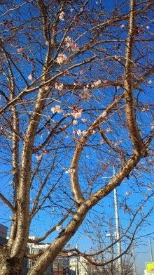 尼崎市南塚口の靴修理店CRADLE(クレイドル)のブログ-2013013109010000.jpg