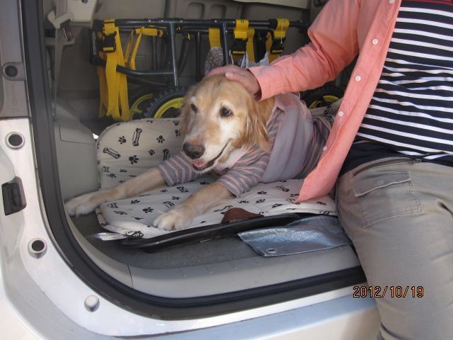 クミーゴの保護犬ブログ