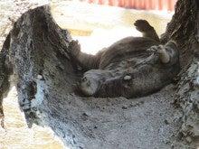 $小笠原のエコツアー 小笠原旅行 小笠原観光 小笠原の情報と自然を紹介します-動物園