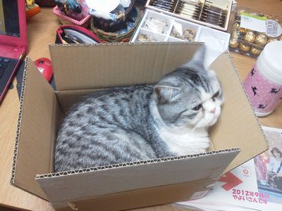 猫カフェ&まるかんのお店♡♡♡(=^・^=)♡♡♡「ニャンかCoCoツイてる!」