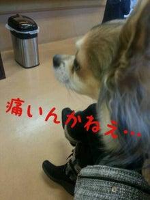 A.コッカー 専務のつぶやき-itai.jpg