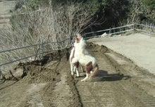 馬森(まもり)牧場  千葉県南房総市・お馬とふれあえる愉快な体験牧場-遊ぶ仔馬と若馬