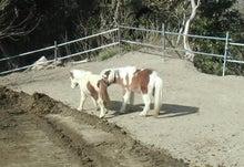 馬森(まもり)牧場  千葉県南房総市・お馬とふれあえる愉快な体験牧場-ソラとビータ