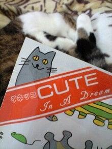 ずれずれブログ…湘南で猫と暮らせば…-130212_1504~0001.jpg