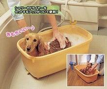 シーズー犬~がちゃぴんの日々~-wannyan_324460.jpg