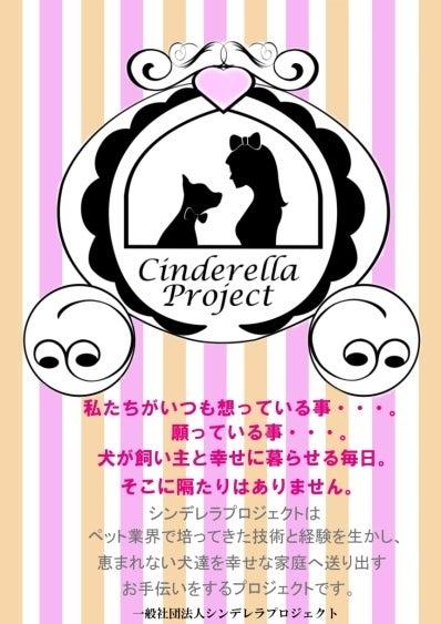 $シンデレラプロジェクト ★保護犬と有志トリマーによるシンデレラストーリー★