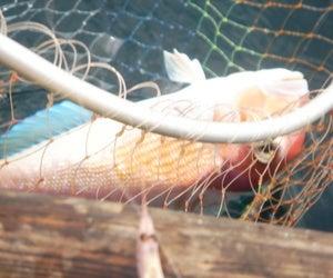 網代のボート釣りポイント情報-網代のアマダイ釣れる場所