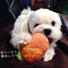 $スギちゃんオフィシャルブログ「これから復帰だぜぇ~ご心配頂いてありがとうだぜぇ~」Powered by Ameba