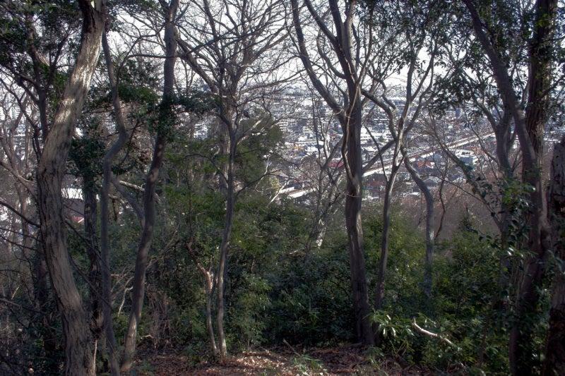小沢城浅間社からの眺め