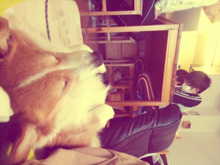 Twins & Dog-largo_20130216151343.jpg
