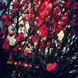 Spring …*
