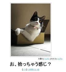 かえると猫と(新)