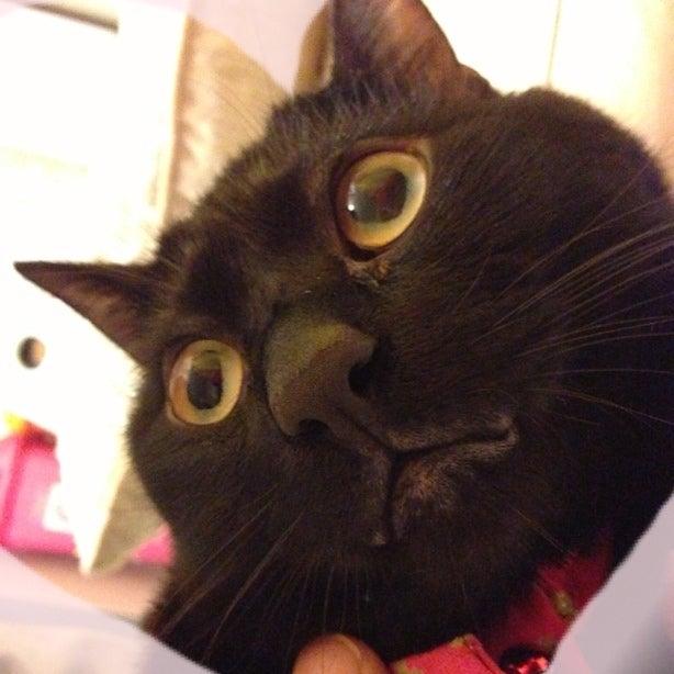 猫 口元 黒い塊